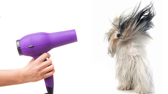 Sesión de peluquería para tu perro sin salir de casa | Ecohappy Store