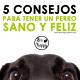 Consejos perro sano Ecohappy
