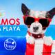 Ecohappy playas de perros